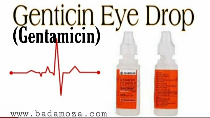 gentamicjn eye/ear drop